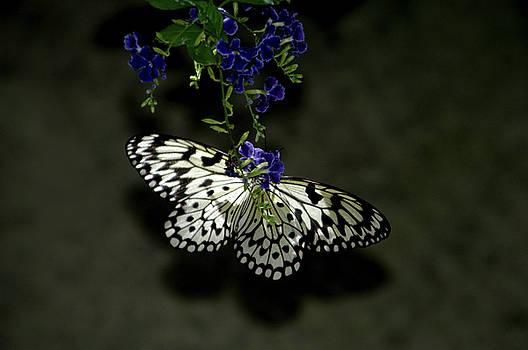 Wings on a Flower by Alynne Landers