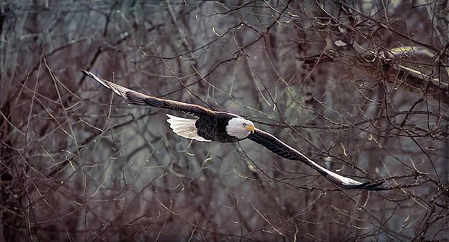 Wingspan by James Figielski by Paulinskill River Photography