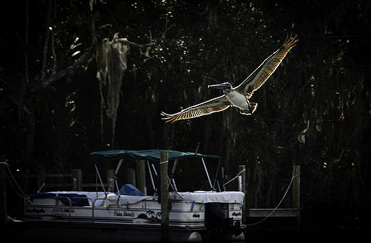 WingSpan by Scott Heister