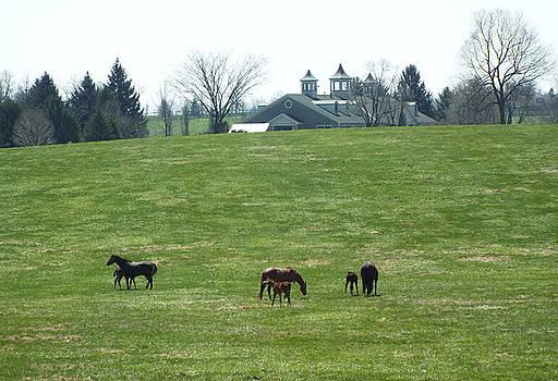WinStar Farm by Gilbert Pennison