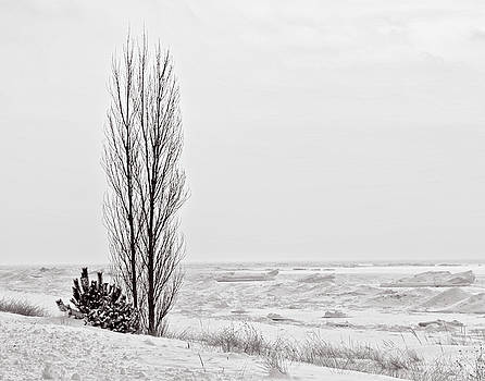 Winter @ Oval Beach by Winnie Chrzanowski