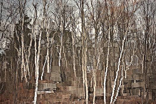 Winter 2016 by Gillis Cone