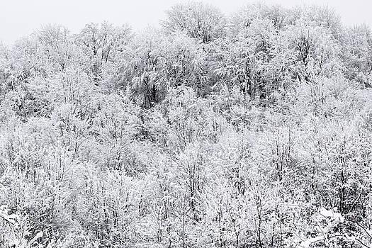 Winter 2017 by Julien Van Dommelen