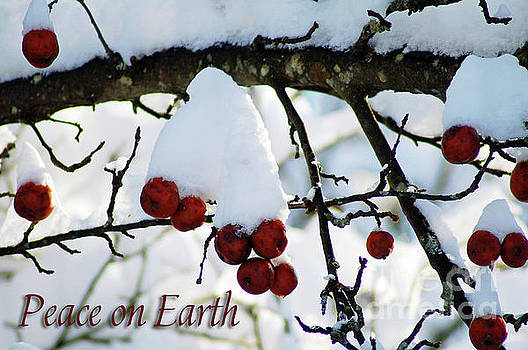 Winter Apples Peace on Earth by Diane E Berry