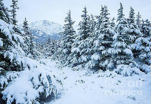 Winter Arrives by Tim Newton