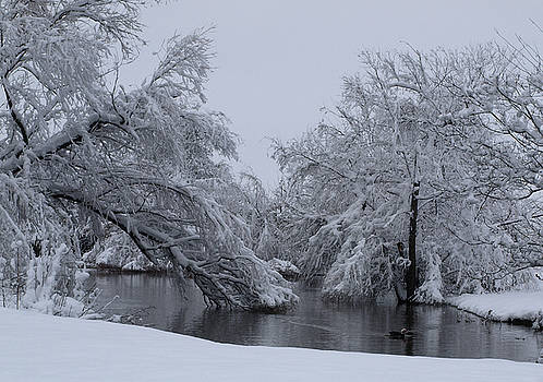 Winter at the Pond by Gail Finger