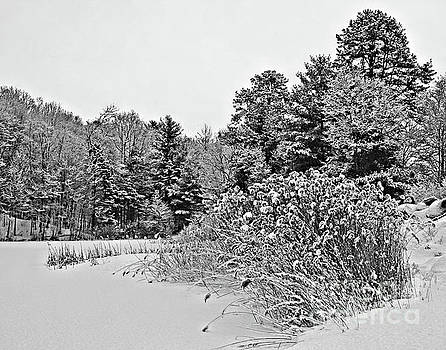 Winter At The Pond In Black And White by Smilin Eyes  Treasures