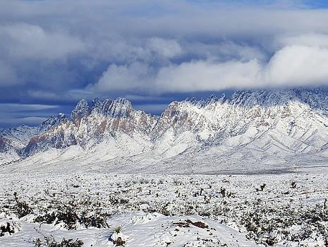 Kurt Van Wagner - Winter Beauties Organ Mountains