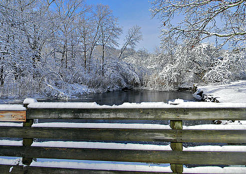 Winter Beauty by Diane Valliere