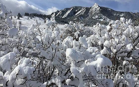 Winter beauty  by R Mahlouji