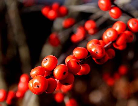 Diane Merkle - Winter Berries