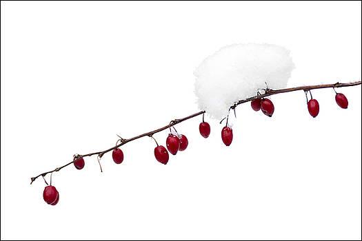 Winter Berries by Michael Bufis