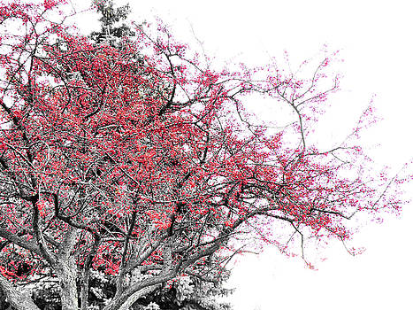 Scott Hovind - Winter Berries
