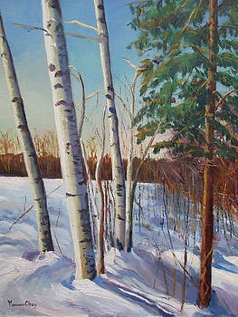 Winter Birch at Hale by Maureen Obey