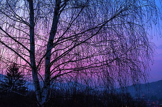 Jenny Rainbow - Winter Birch Tree