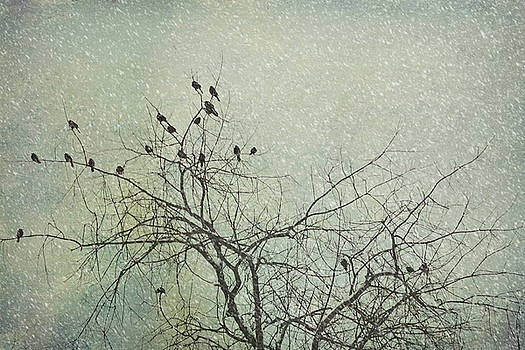 Winter Birds by Noah Browning