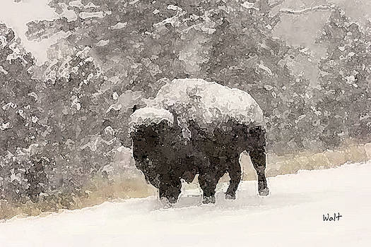 Winter Bison by Walter Chamberlain