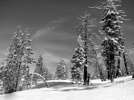 Winter Black and White by Irina Hays