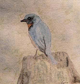 Winter Bluebird by Angela Davies