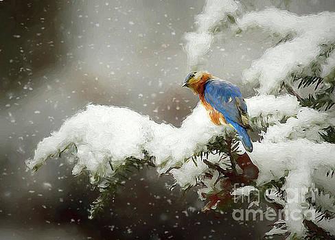 Winter Bluebird by Darren Fisher