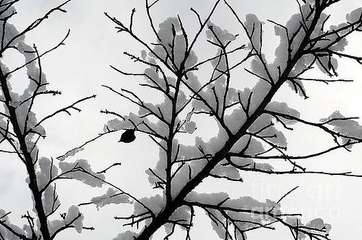 Winter Branches by John  Mitchell