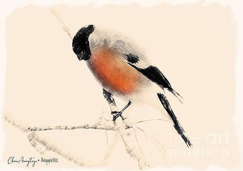 Winter Bullfinch by Chris Armytage