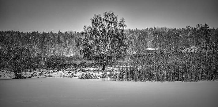 Winter BW #h2 by Leif Sohlman