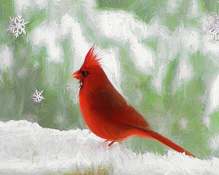Winter Cardinal by John Freidenberg