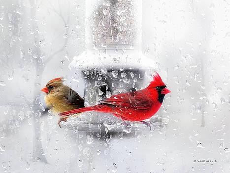 Winter Cardinals by Celia Durand