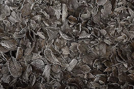 Jenny Rainbow - Winter Carpet of Frozen Leaves
