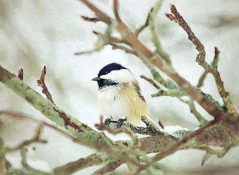 Winter Chickadee by Sue Collura