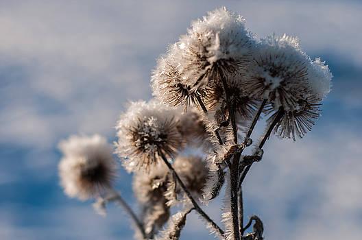 Miguel Winterpacht - Winter Chills