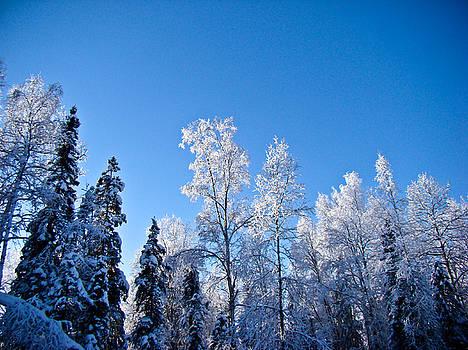Dora Miller - Winter Cold