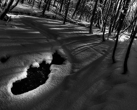 Winter contrast by Tim Buisman