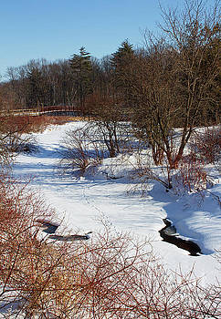 Winter Creek Lined With Red Osea Dogwood by Barbara McMahon