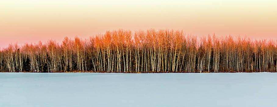 Winter by David Wynia