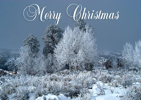 Winter Day Christmas Card by R