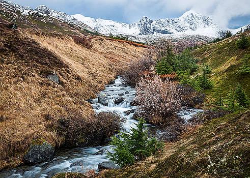 Winter Descending by Tim Newton