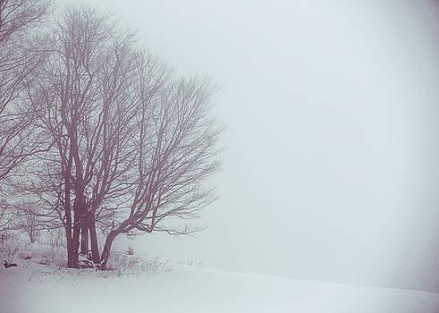 Winter Evening by Tim Kirchoff