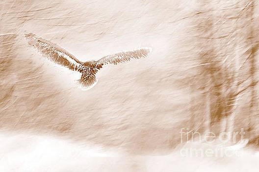 Winter Feathers by Sandra Silva