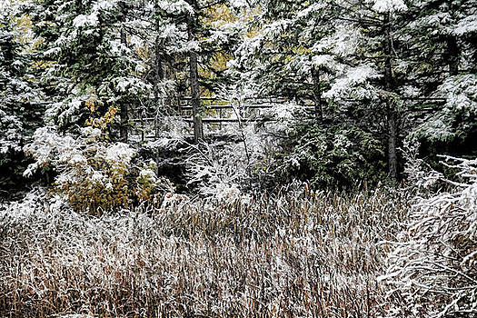 Roland Stanke - winter fence