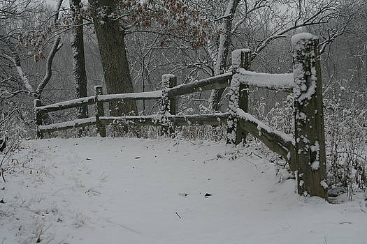 Winter Fence Trail H by Dylan Punke