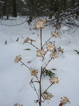 Winter Flowers 001 by George Bostian