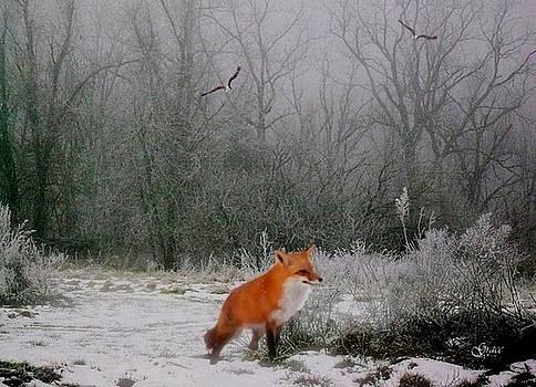 Winter Fox by Julie Grace