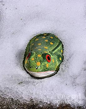 Winter Frog by Smilin Eyes  Treasures