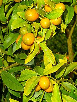 Robert Meyers-Lussier - Winter Fruits