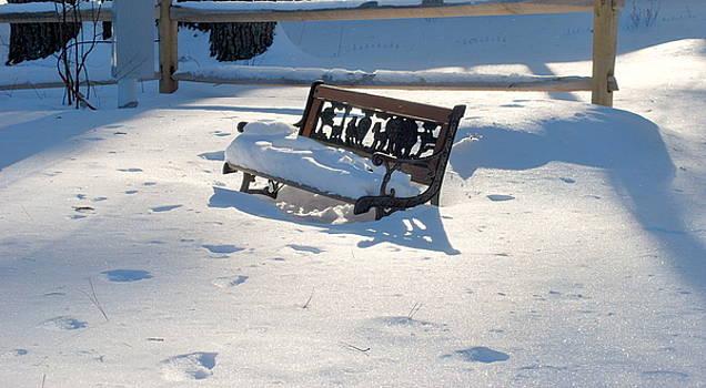 Winter Garden by Cathy Hacker