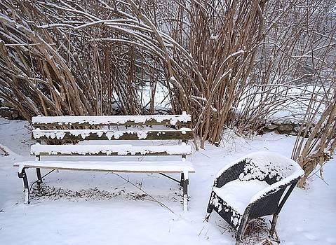 Winter garden by Inessa Williams