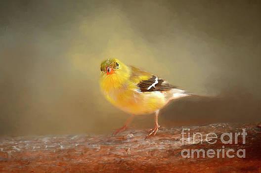 Winter Goldfinch by Darren Fisher