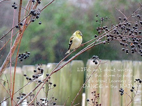 Jayne Wilson - Winter Goldfinch in the Rain with Quotation